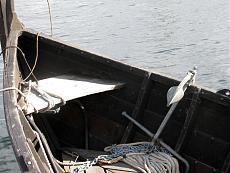 Le navi vichinghe di Roskilde-roskilde-var-3.jpg